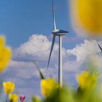A photograph of a landcape with wind turbines used to generate renewable energy, seen from a field of tulips.