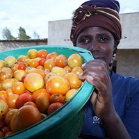 Tomato_value_chain_ in_Rwanda_01226_18052017_400.jpg